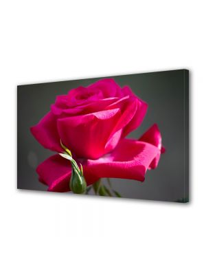 Tablou Canvas Flori Trandafir rosu gingas