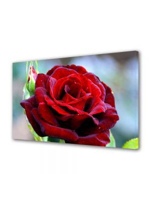 Tablou Canvas Luminos in intuneric VarioView LED Flori Trandafir rosu clasic