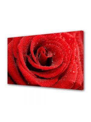 Tablou Canvas Flori Trandafir cu bruma