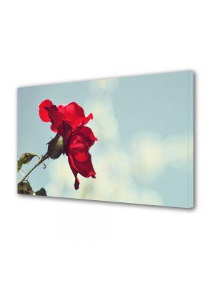 Tablou Canvas Luminos in intuneric VarioView LED Flori Trandafir rosu si cer senin