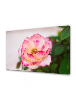 Tablou Canvas Flori Trandafir alb
