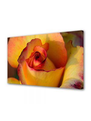 Tablou Canvas Flori Trandafir galben