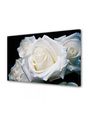 Tablou Canvas Luminos in intuneric VarioView LED Flori Trandafiri albi