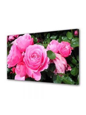 Tablou Canvas Flori Trandafirii sunt roz