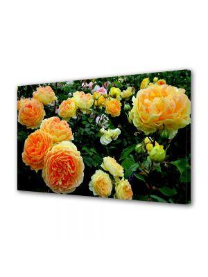 Tablou Canvas Flori Gradina cu trandafiri
