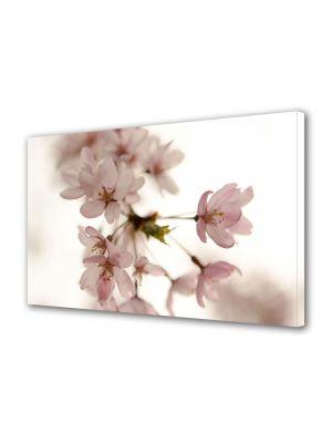 Tablou Canvas Luminos in intuneric VarioView LED Flori Floare roz japoneza
