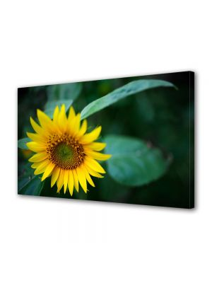 Tablou Canvas Flori Pui de floricica soarelui