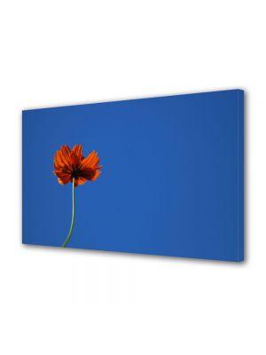 Tablou Canvas Flori Mac puternic