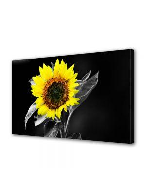 Tablou Canvas Flori Floarea soarelui