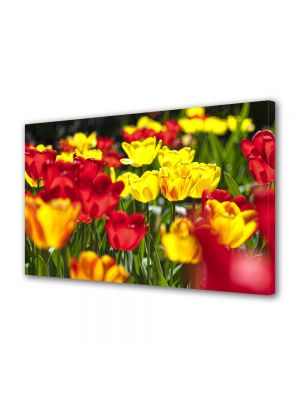 Tablou Canvas Flori Flori rosii si galbene
