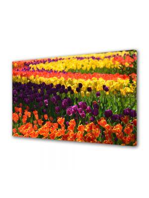 Tablou Canvas Flori Curcubeu de flori