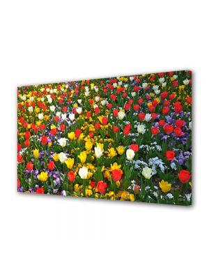Tablou Canvas Flori Culori amestecate