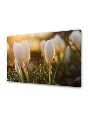 Tablou Canvas Flori Muguri de flori