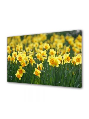 Tablou Canvas Flori Narcise galbuie