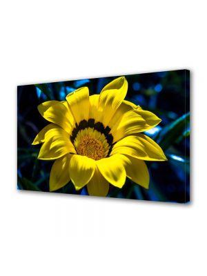 Tablou Canvas Luminos in intuneric VarioView LED Flori Petale fine
