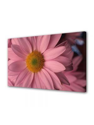 Tablou Canvas Flori Flori cu petale roz pal