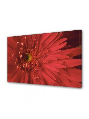 Tablou Canvas Flori Floare cu nuante speciale