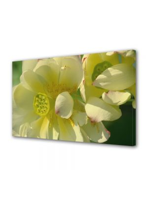 Tablou Canvas Flori Flori firave