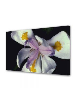 Tablou Canvas Luminos in intuneric VarioView LED Flori Floare cu trei petale