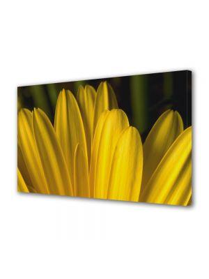 Tablou Canvas Flori Petale galbene
