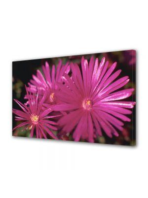 Tablou Canvas Flori Petale subtiri
