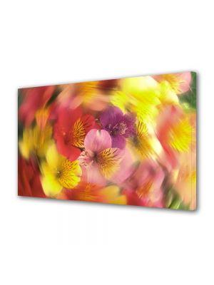 Tablou Canvas Flori Vartej de culori