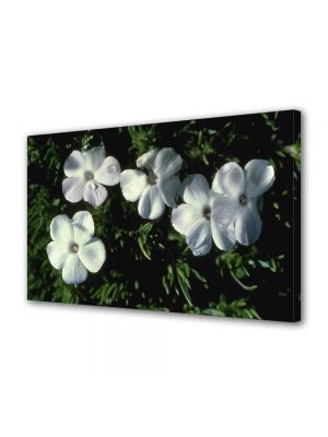 Tablou Canvas Luminos in intuneric VarioView LED Flori Cinci flori albe ca neaua