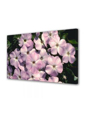 Tablou Canvas Flori Familie mare