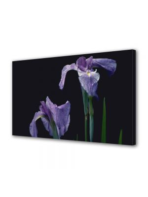 Tablou Canvas Luminos in intuneric VarioView LED Flori Doua violet