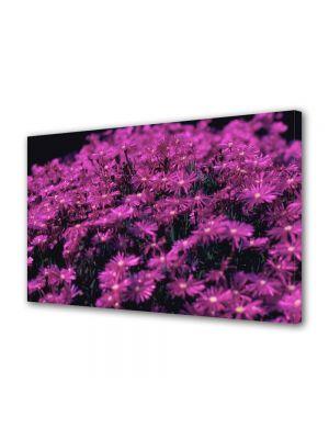 Tablou Canvas Luminos in intuneric VarioView LED Flori Violet aprins