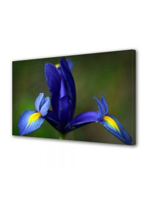 Tablou Canvas Flori Iris albastru