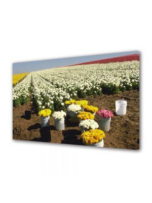 Tablou Canvas Flori Randuri de flori