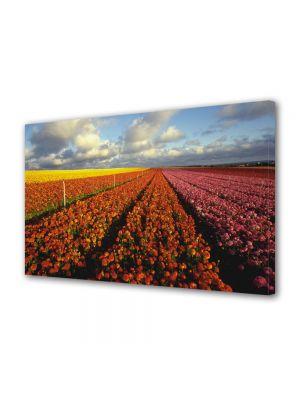 Tablou Canvas Luminos in intuneric VarioView LED Flori Camp imens de flori