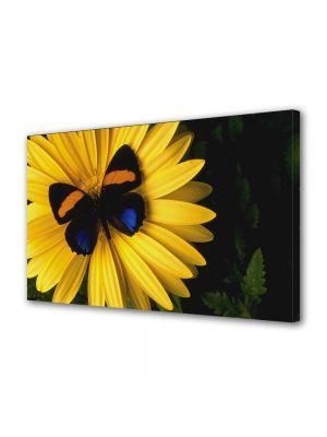 Tablou Canvas Flori Fluture pe floare