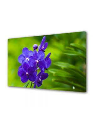Tablou VarioView MoonLight Fosforescent Luminos in intuneric Flori Orhidee albastre
