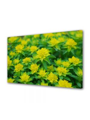 Tablou Canvas Luminos in intuneric VarioView LED Flori Floricele curioase