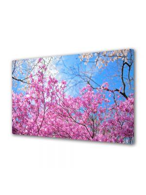 Tablou Canvas Flori Ciresi infloriti