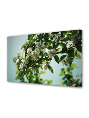 Tablou VarioView MoonLight Fosforescent Luminos in intuneric Flori Flori albe pe crenguta