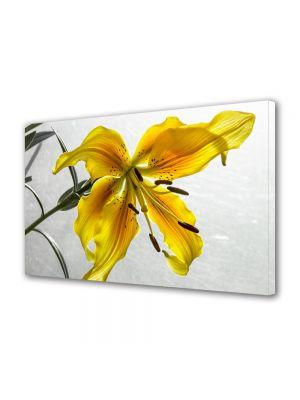 Tablou Canvas Flori Liliac galbui