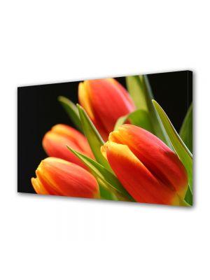 Tablou Canvas Flori Muguri de lalea