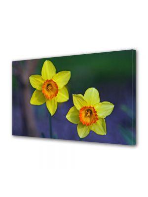 Tablou Canvas Flori Narcise galbene