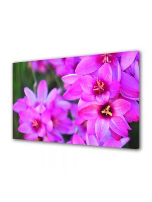 Tablou Canvas Luminos in intuneric VarioView LED Flori Culori vibrante
