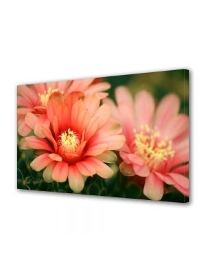 Tablou Canvas Luminos in intuneric VarioView LED Flori Flori de cactus