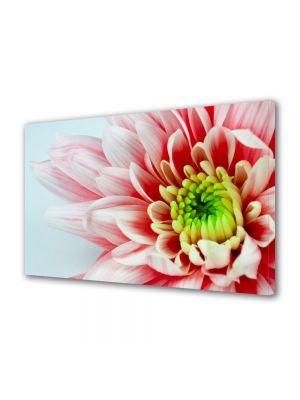 Tablou Canvas Flori Floare alb cu rosu