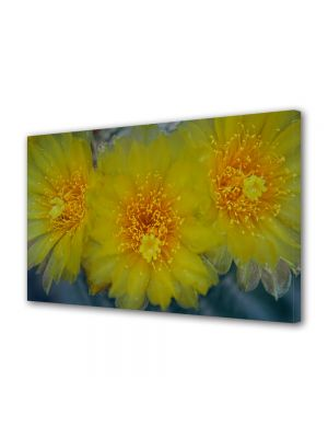 Tablou Canvas Luminos in intuneric VarioView LED Flori Flori galbene de cactus