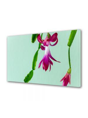 Tablou Canvas Flori Cactus de craciun