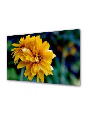 Tablou Canvas Flori Dupa amiaza de vara