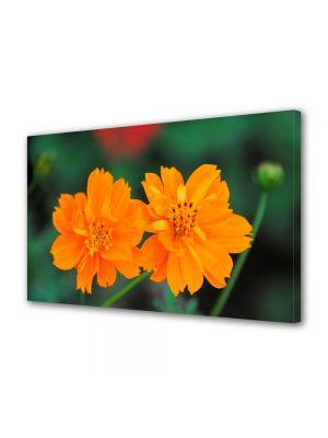 Tablou Canvas Flori Flori cu tente portocalii