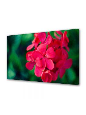 Tablou Canvas Flori Floricica speciala