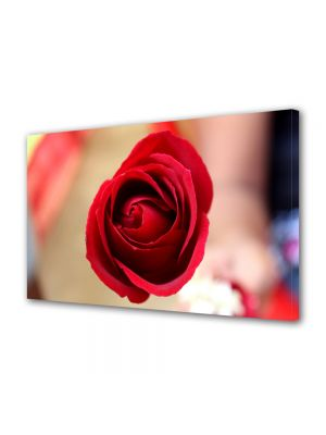 Tablou Canvas Flori Fir de trandafir rosu